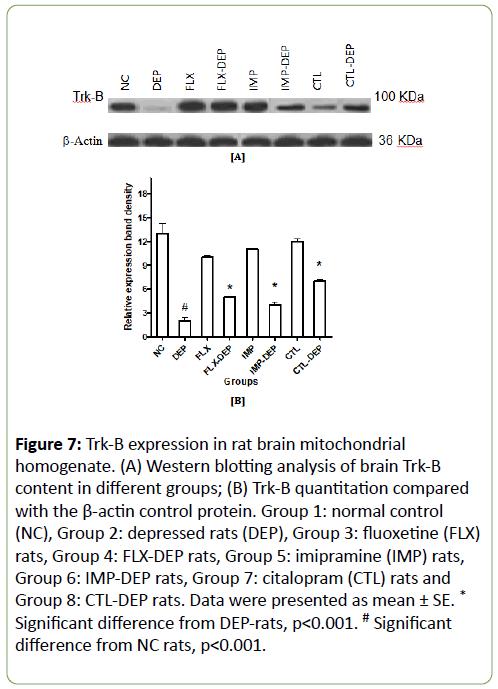 Biomedical-Sciences-blotting-analysis