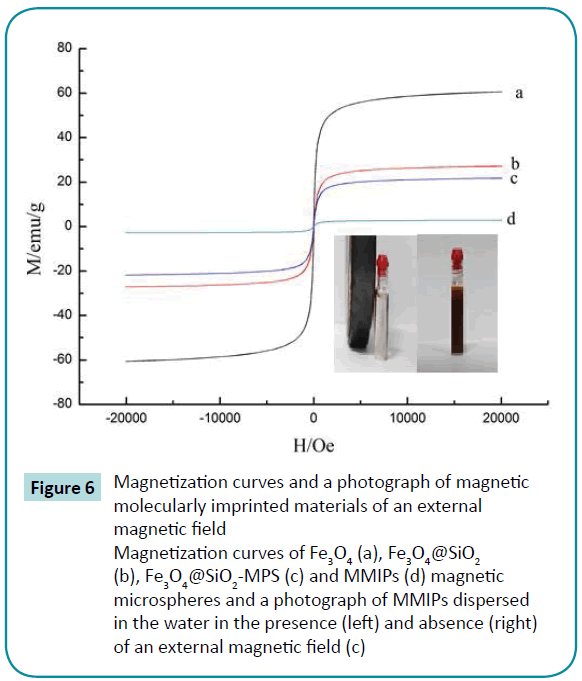 biomedical-sciences-Magnetization-curves