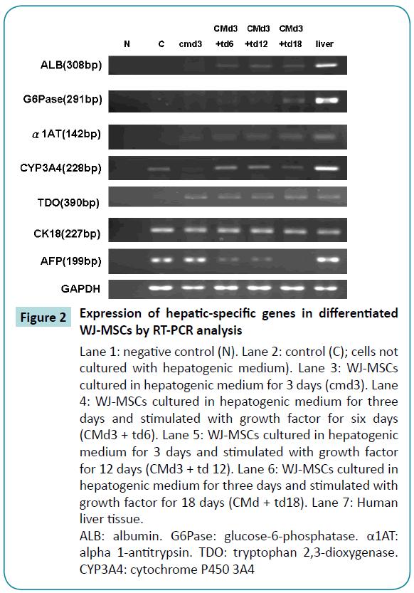biomedical-sciences-hepatic-specific
