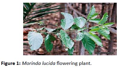 jbiomeds-flowering-plant